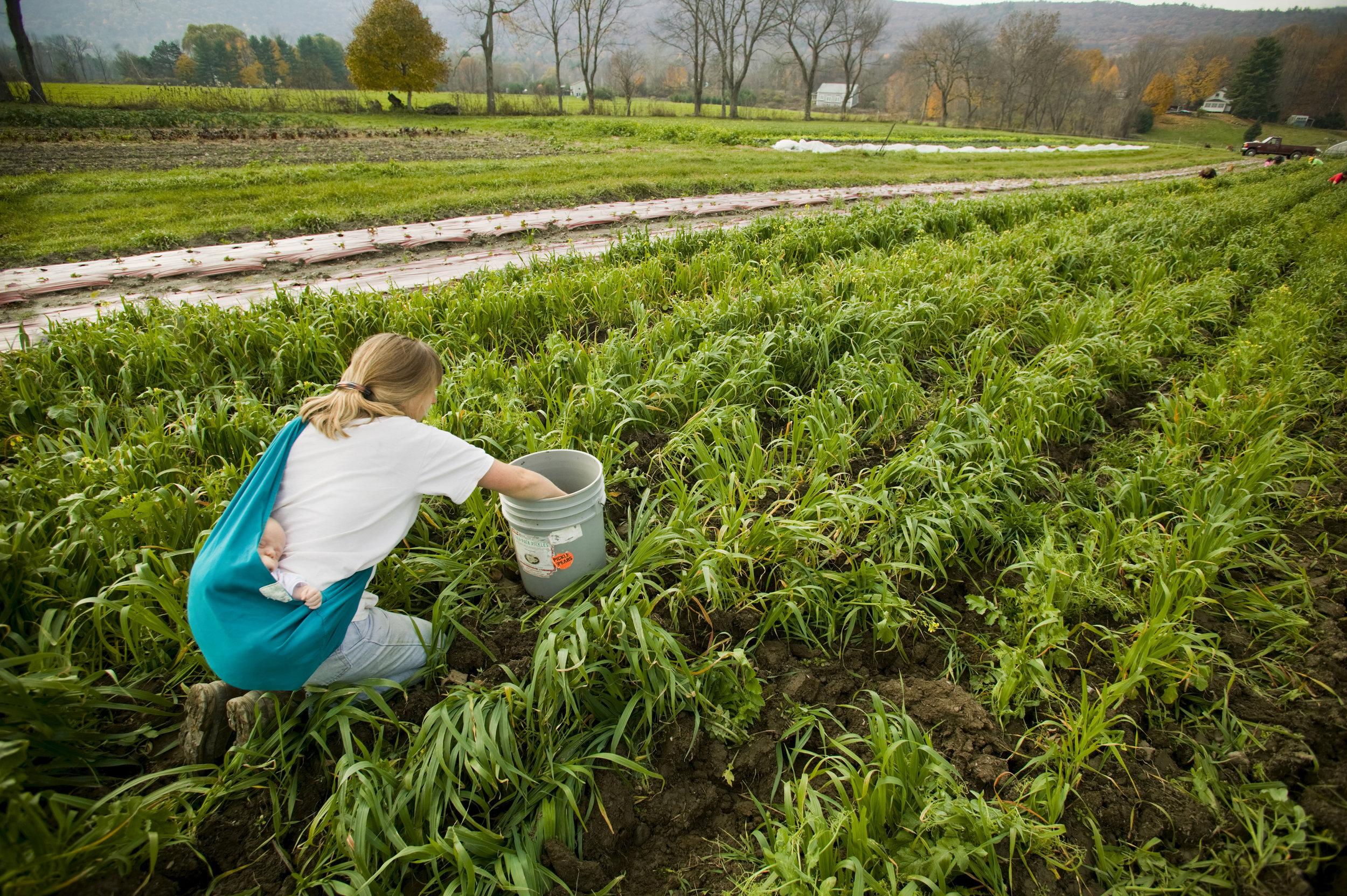 Elizabeth, Farmer, Egremont,Massachusetts