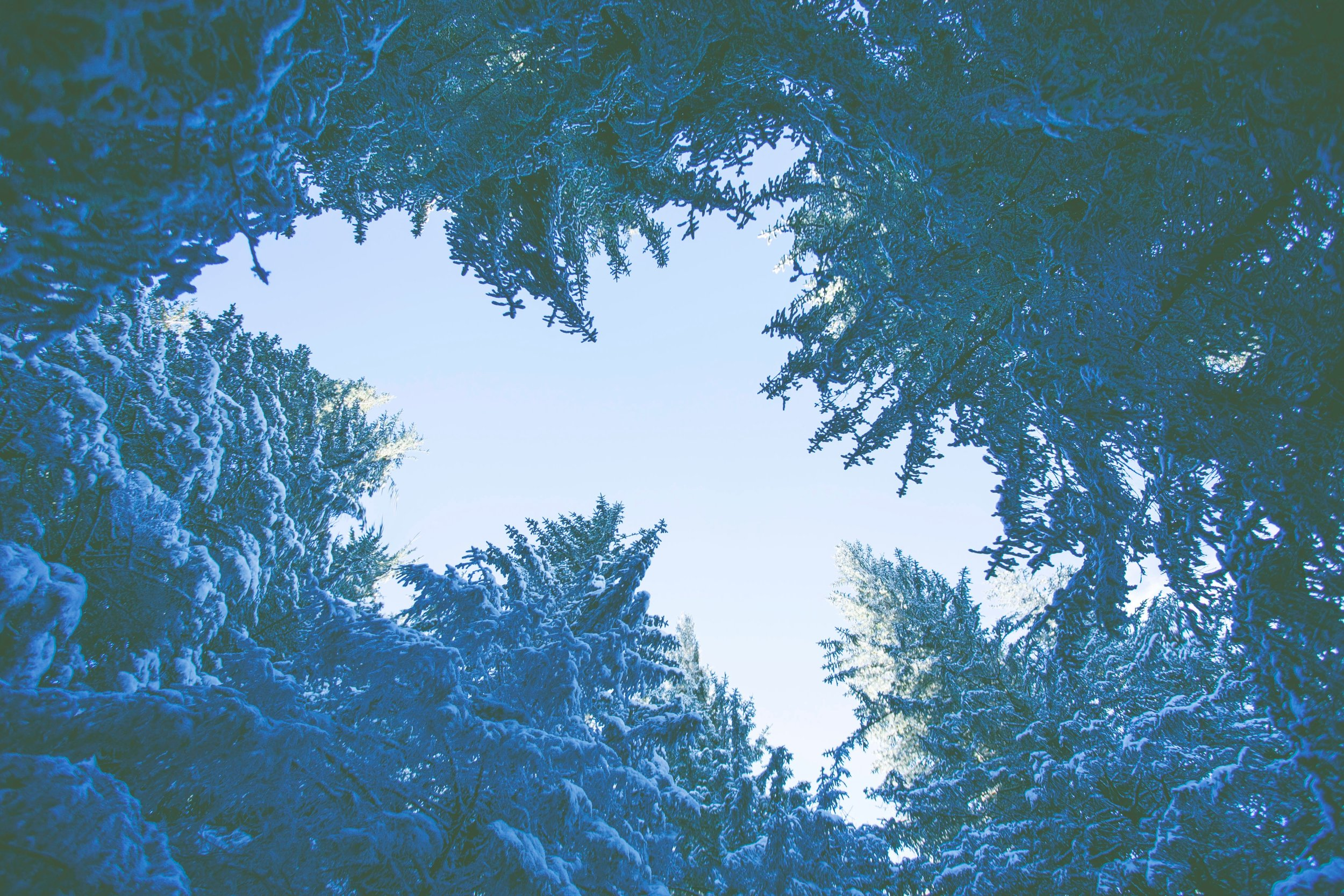photo-nic-co-uk-nic-186211.jpg
