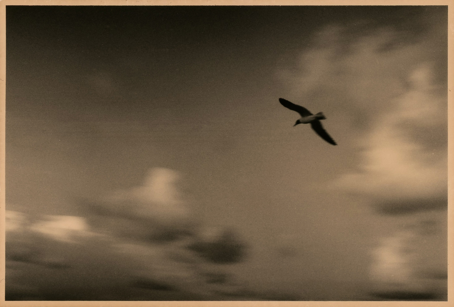 Love Letter to Florida (bird in sky)