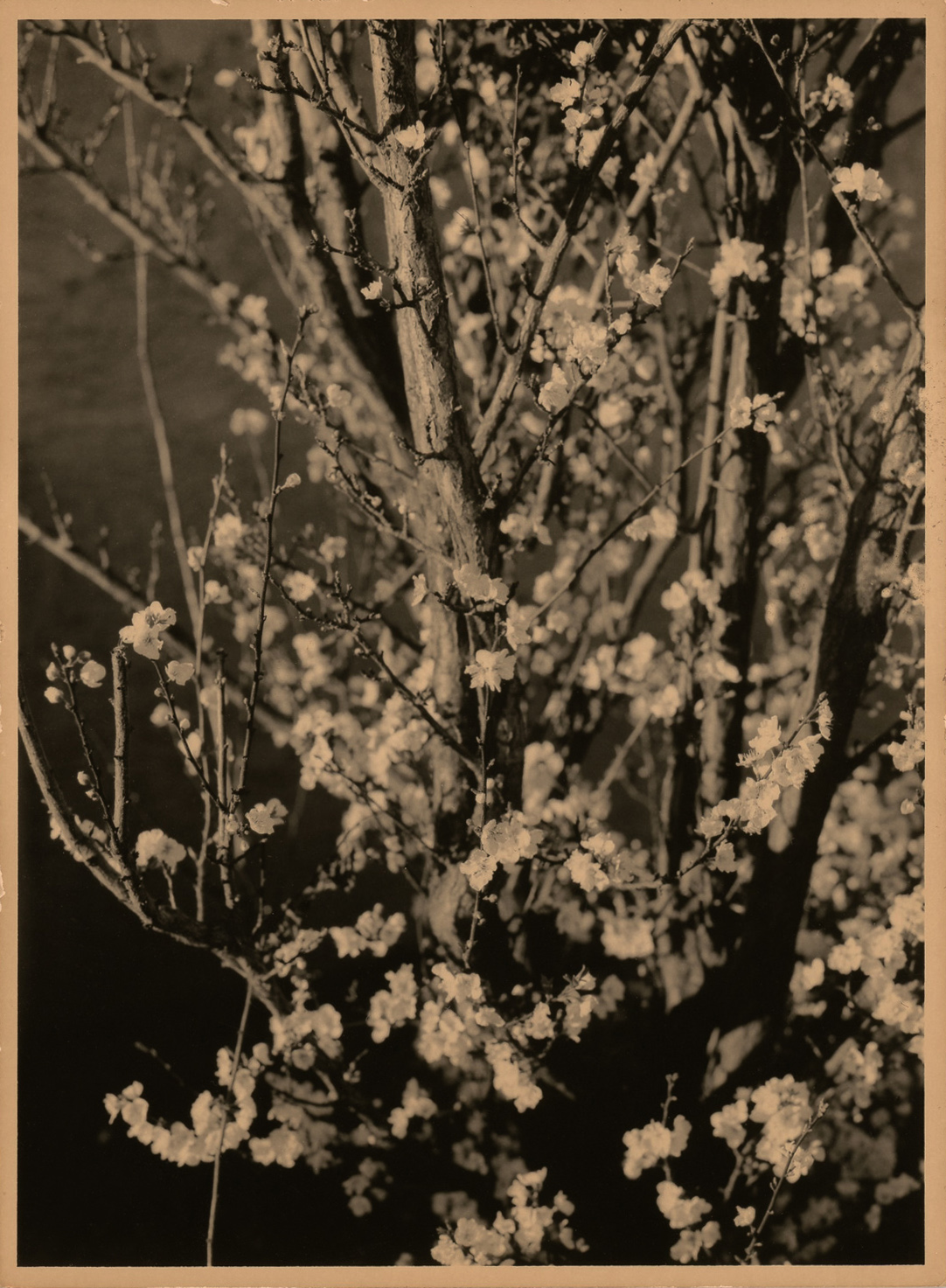 Branches and Flowers