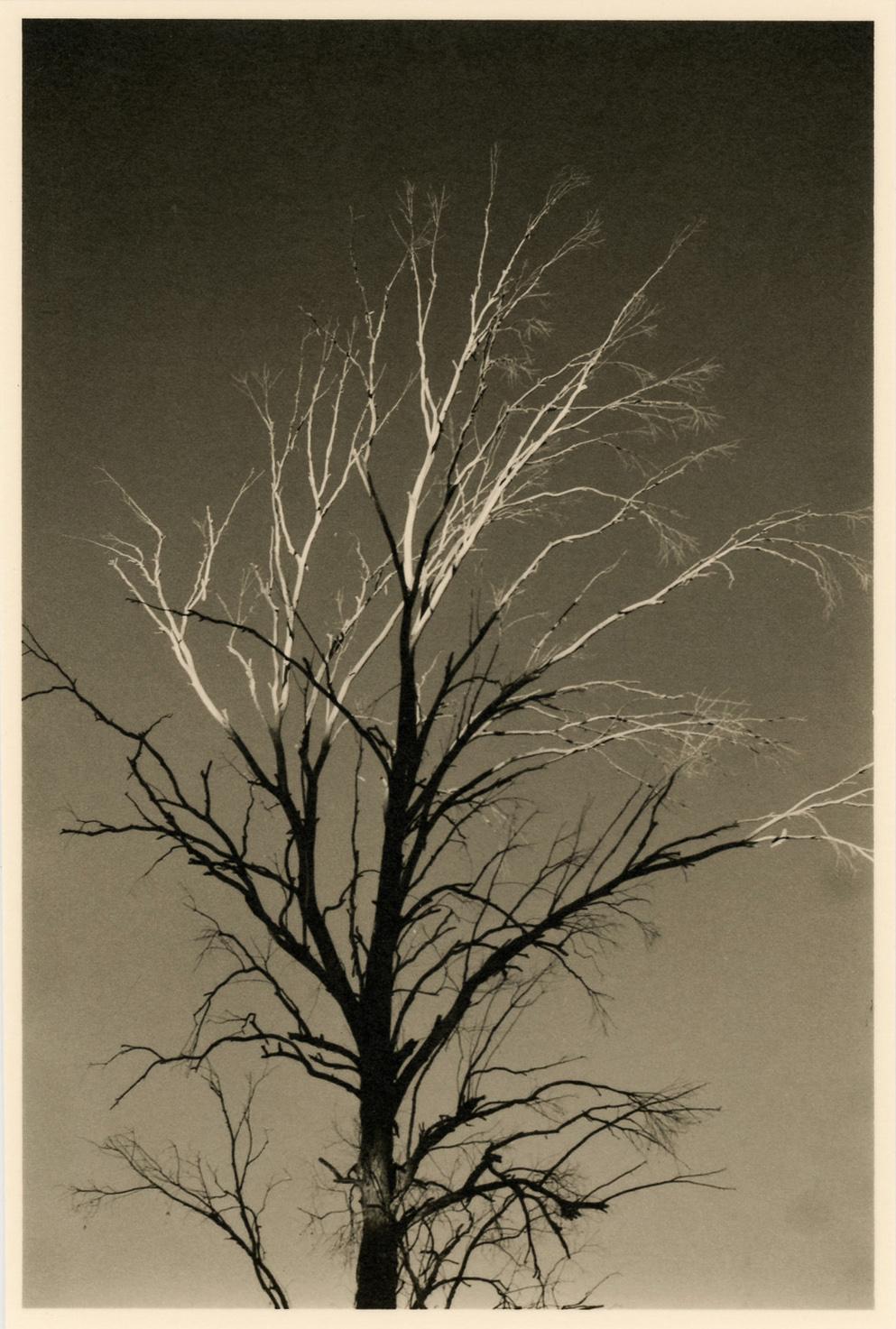 Tree with Light