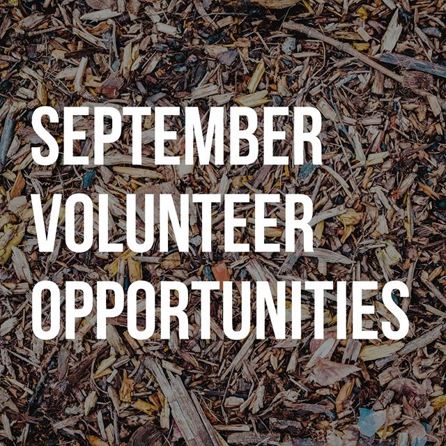Ready to serve in September? Here are some amazing volunteer opportunities in our community this month! 🍂 Click the link in our profile to see them!