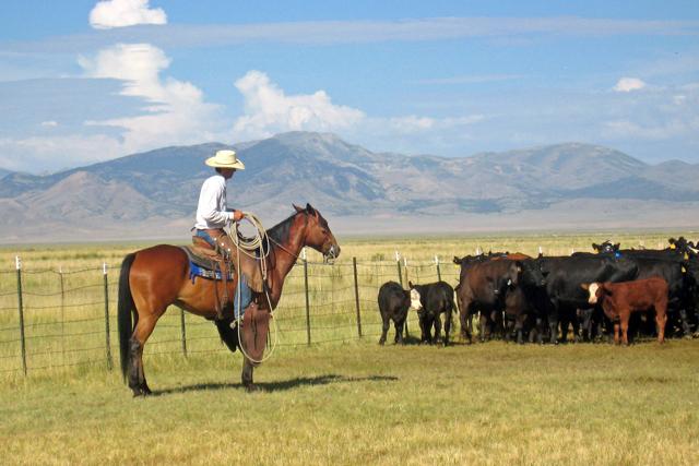 ranching.jpg