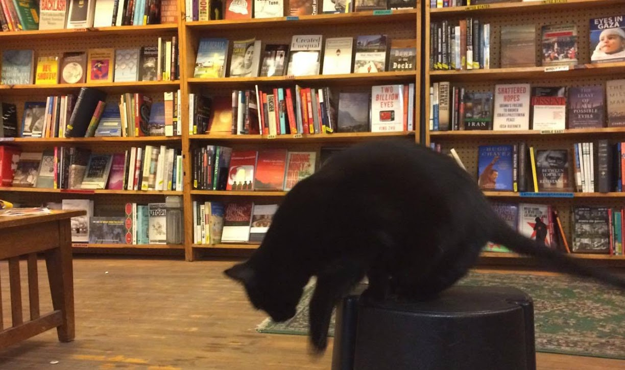 Harvey, Rainbow Bookstore Cooperative's shop cat, in the store on Monday.