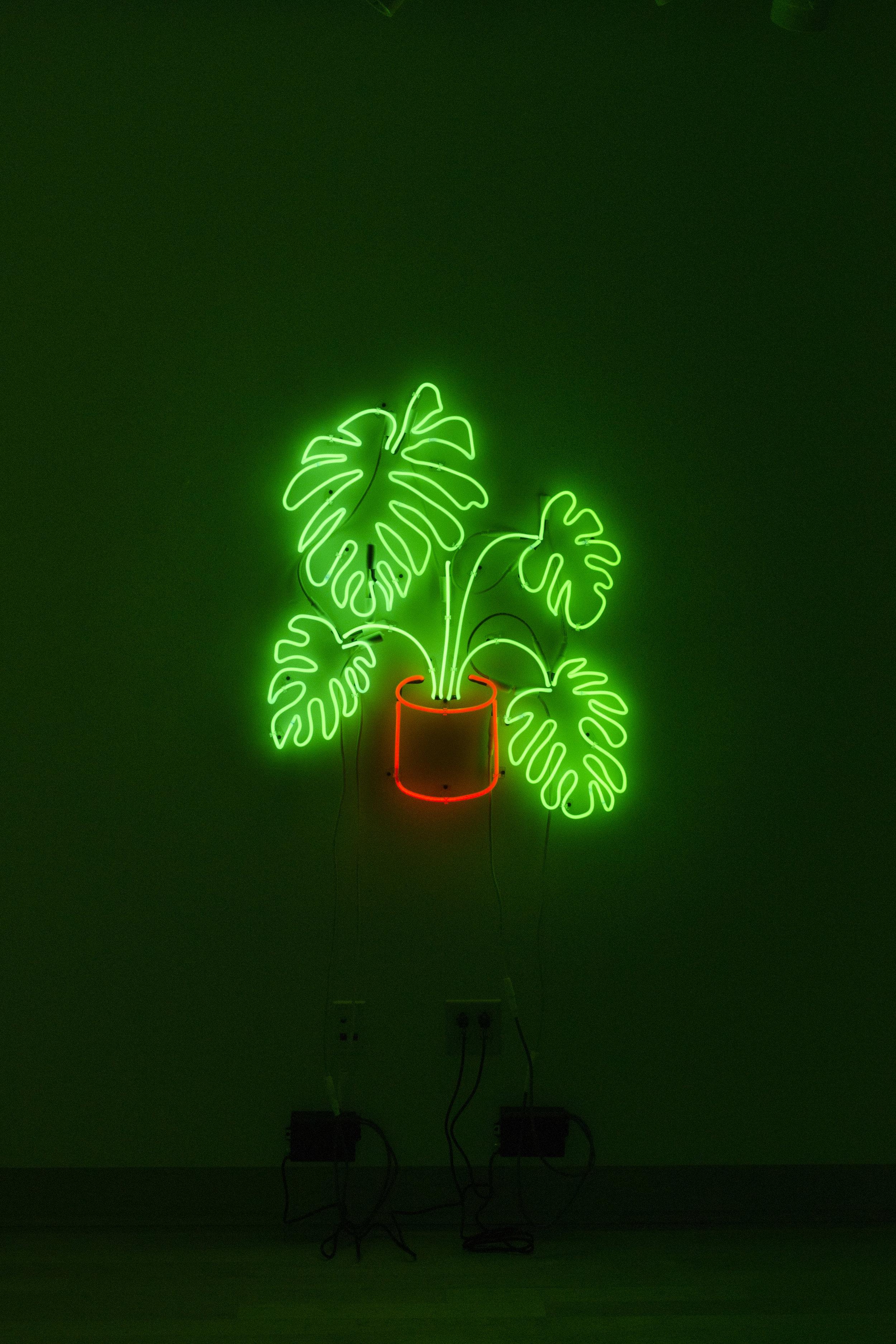 tropic II.jpg