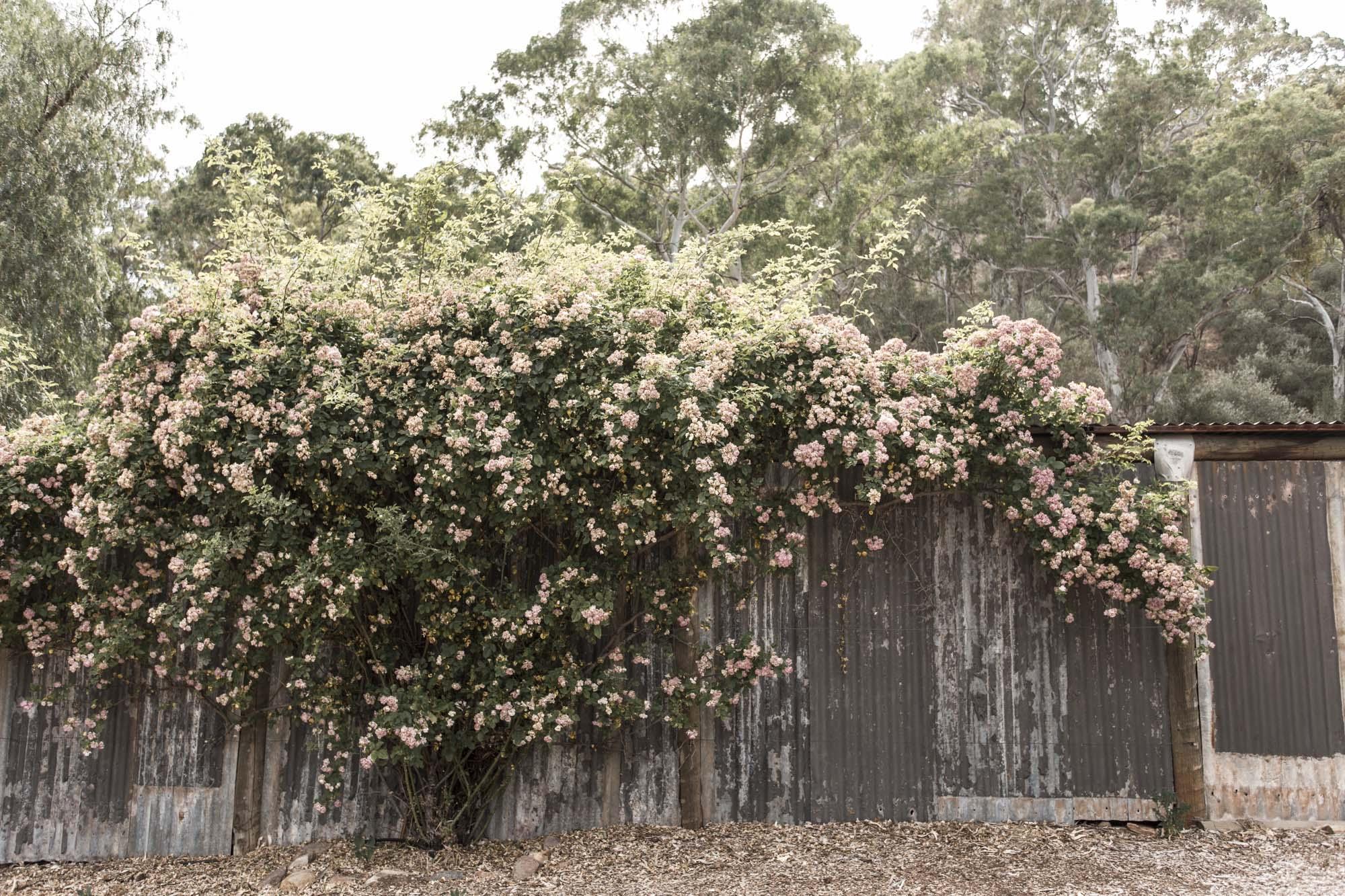 Valentina Perez Imaging Marybank Farm (4 of 48).JPG