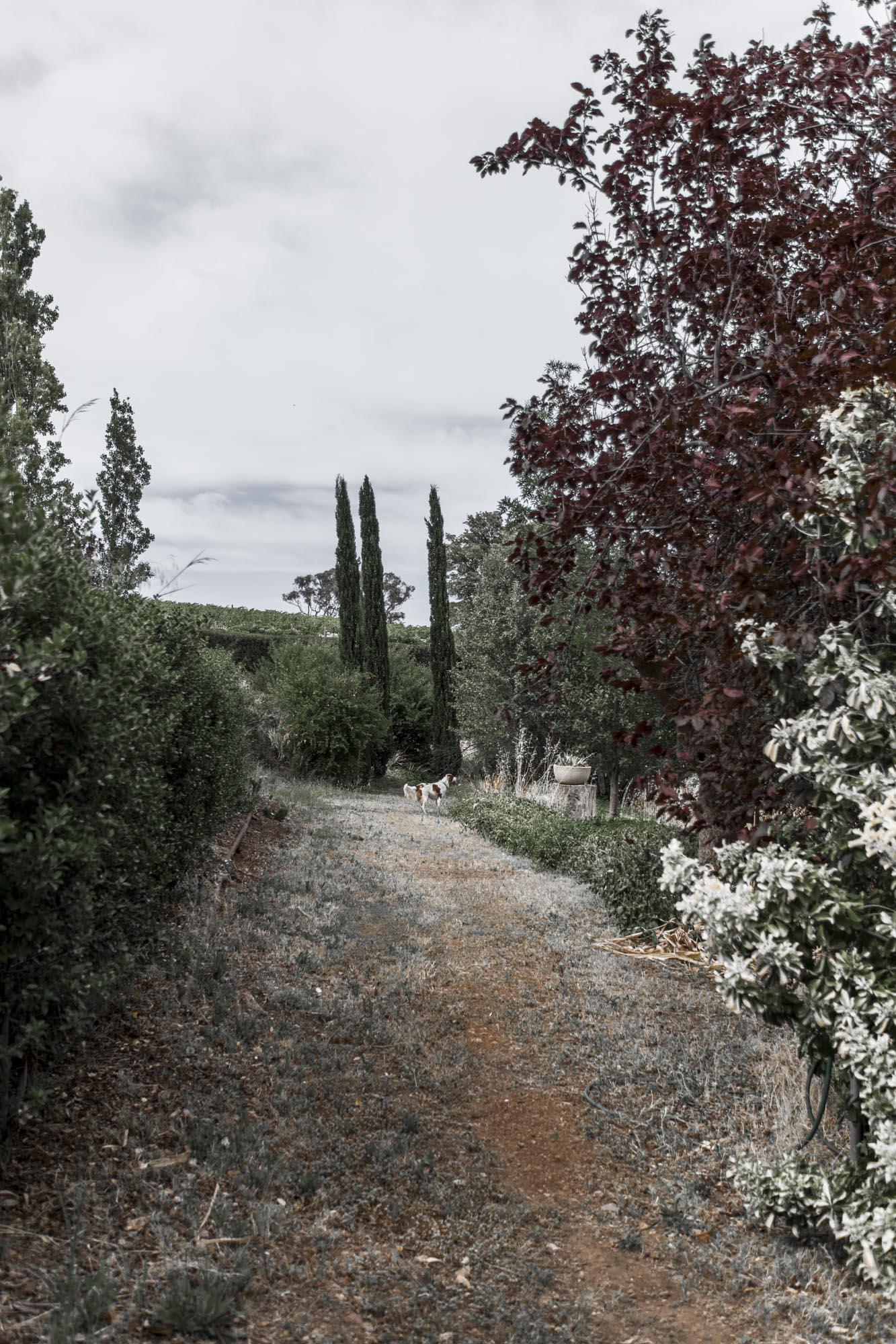 Valentina Perez Imaging Marybank Farm (20 of 48).JPG
