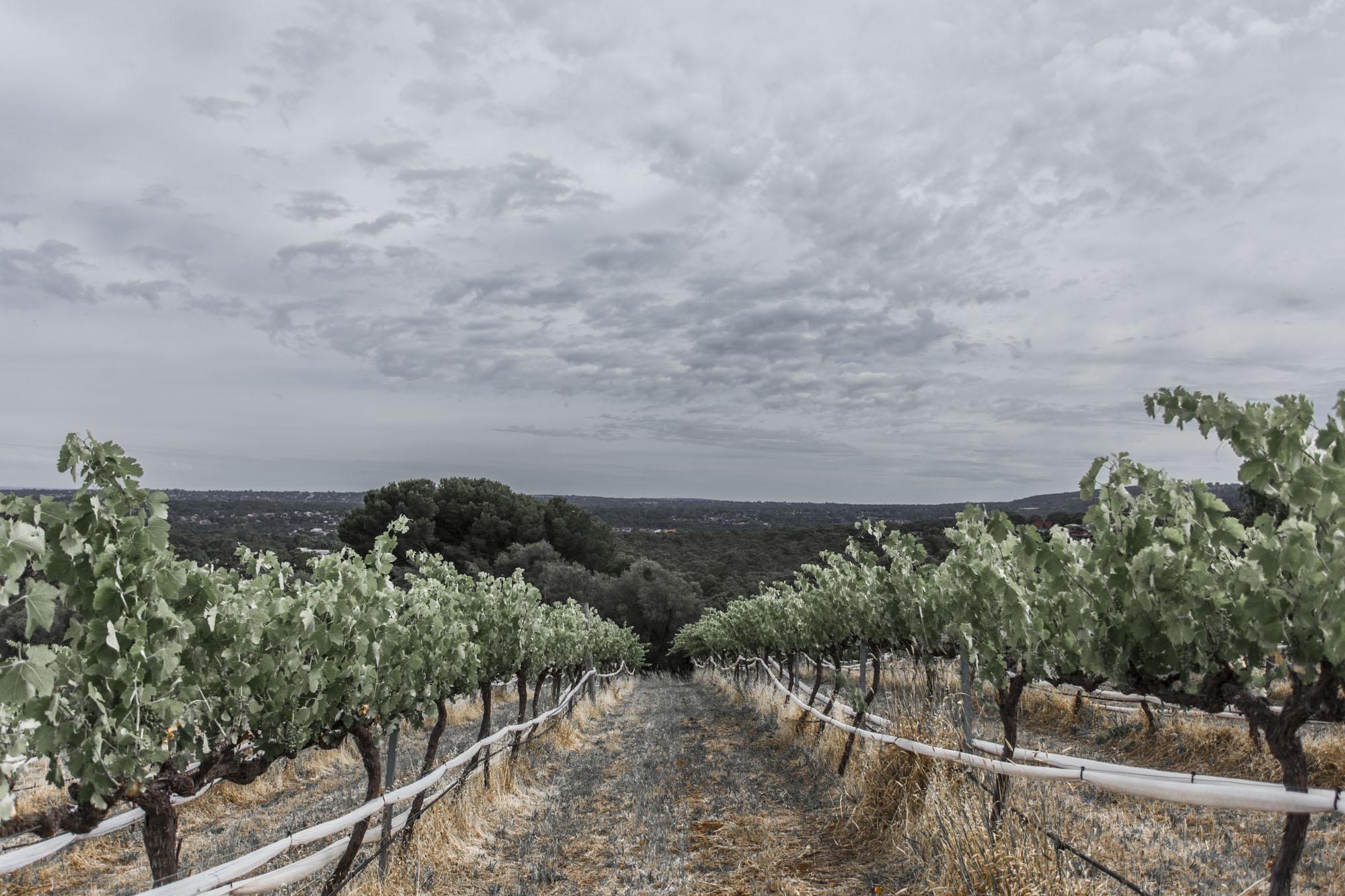 Valentina Perez Imaging Marybank Farm (35 of 48).JPG