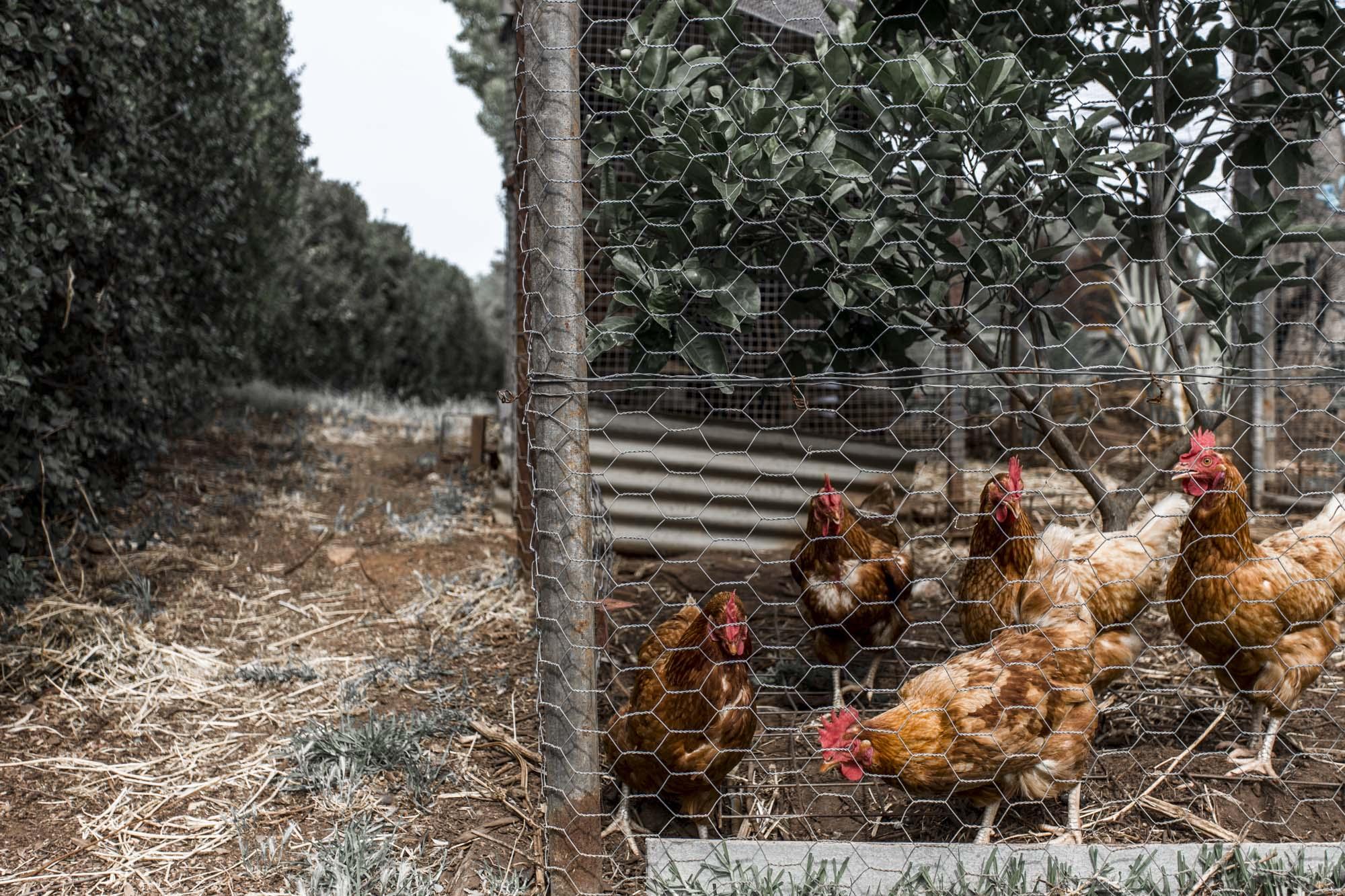 Valentina Perez Imaging Marybank Farm (43 of 48).JPG