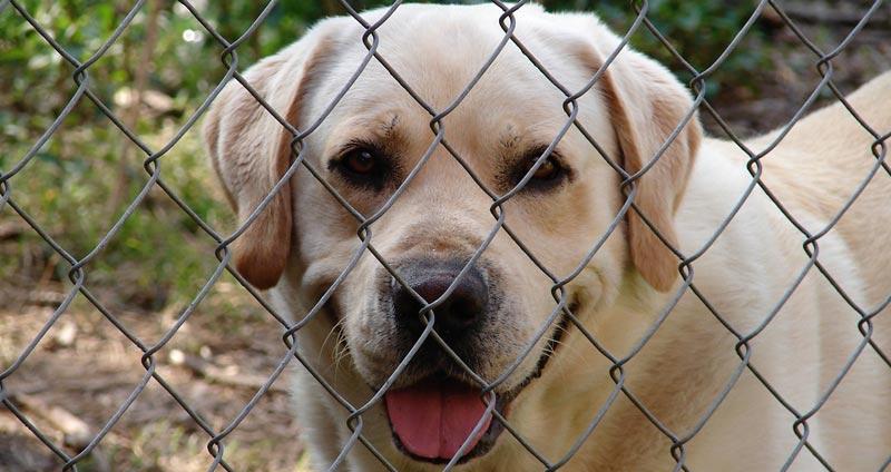 Shelter-dog.jpg