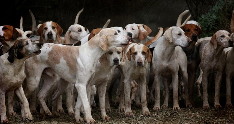 1-Group-of-dogs.jpg