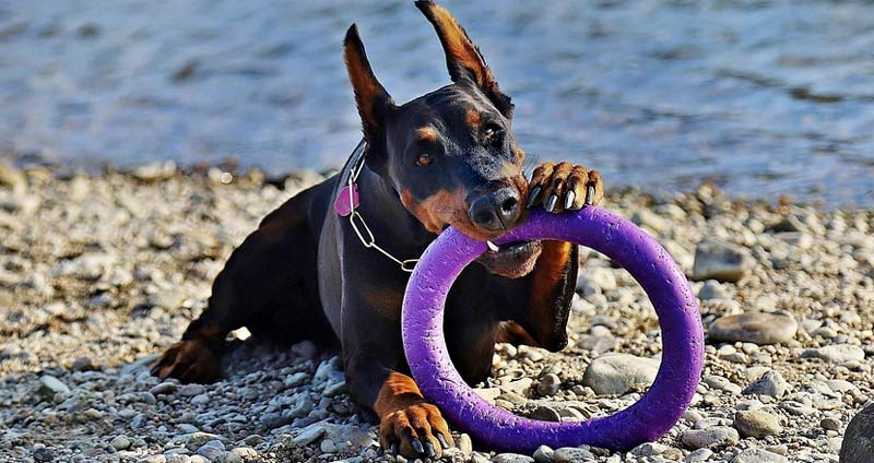 5-Dog-hoop.jpg