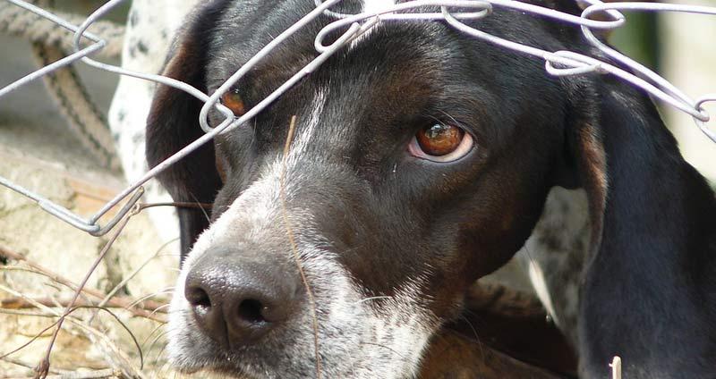8-Dog-under-fence.jpg