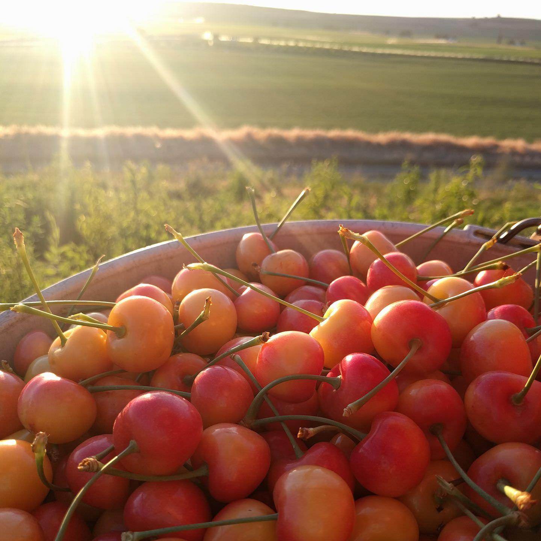 sunset over cherry bucket.jpg