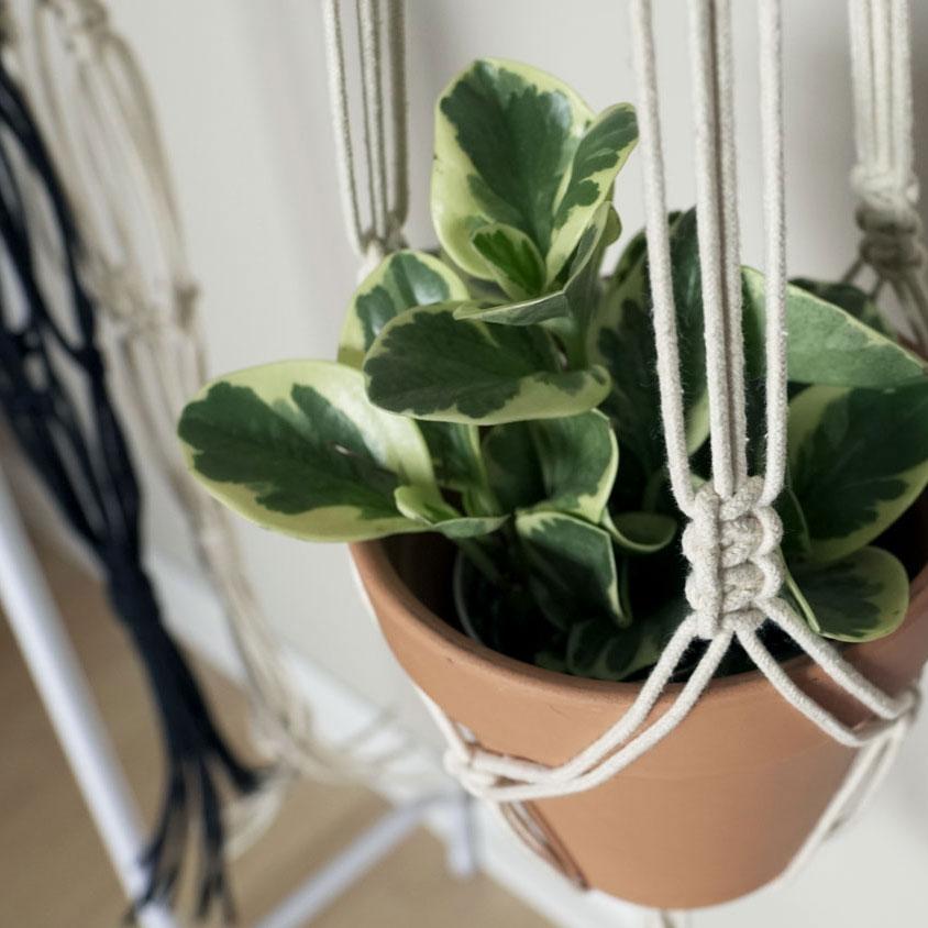 Plant-Hanger-5.jpg