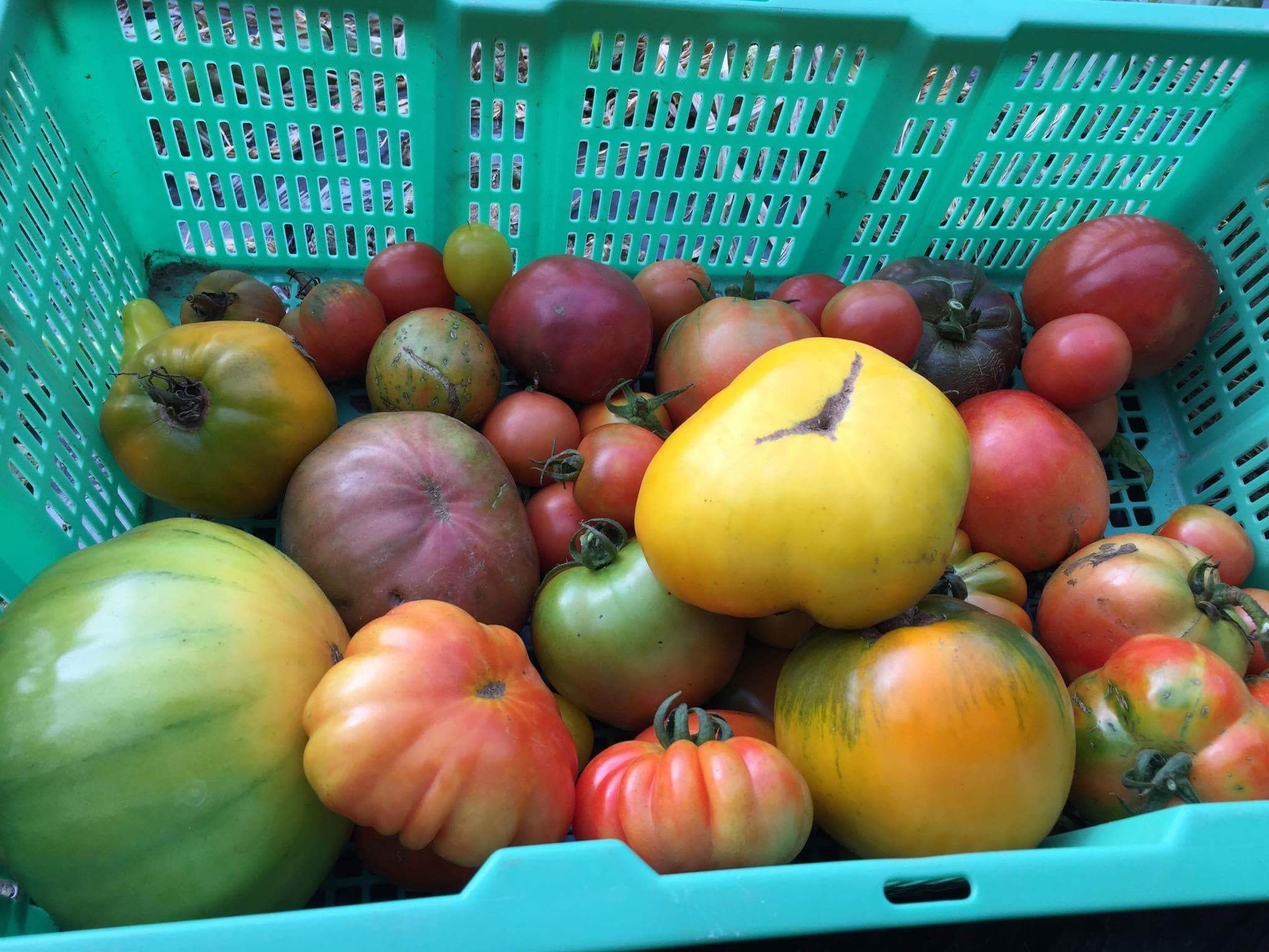Roughly 12 of our 21 varieties of heirloom tomatoes featured here. We'll continue to plant our most successful varieties in 2018.