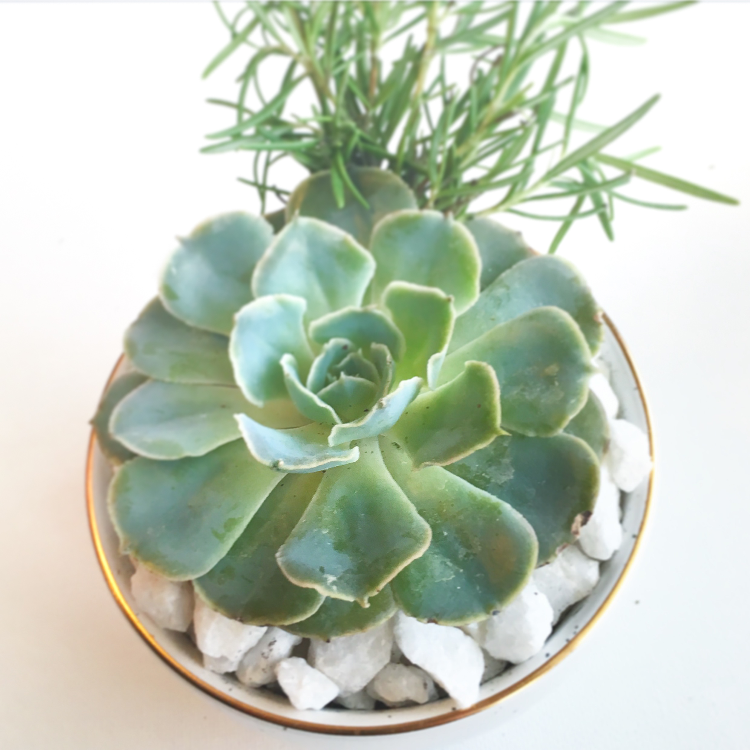 Succulent Gifts -