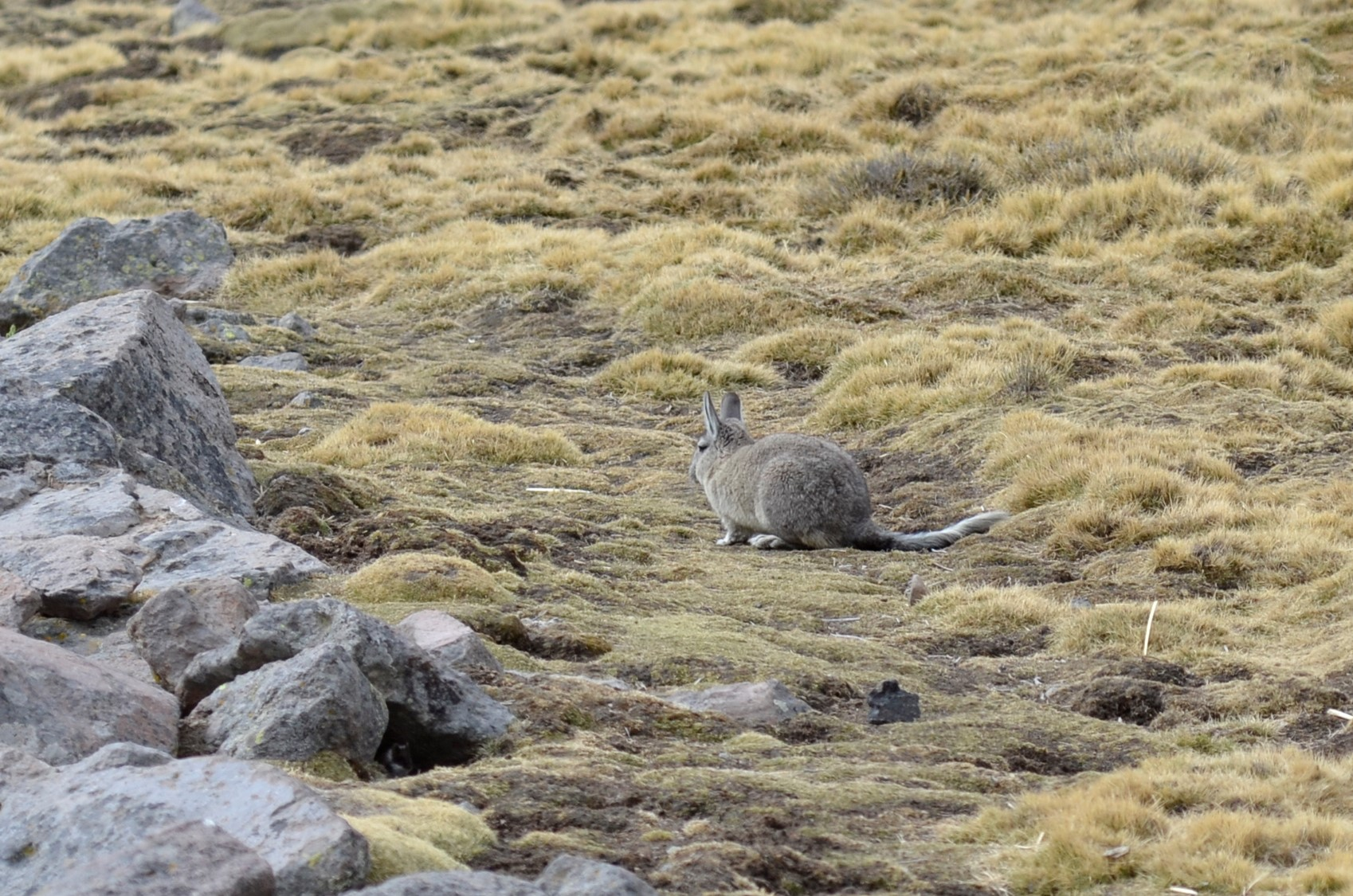 They were hopping all over the rocks but were very difficult to see, given their coloration.