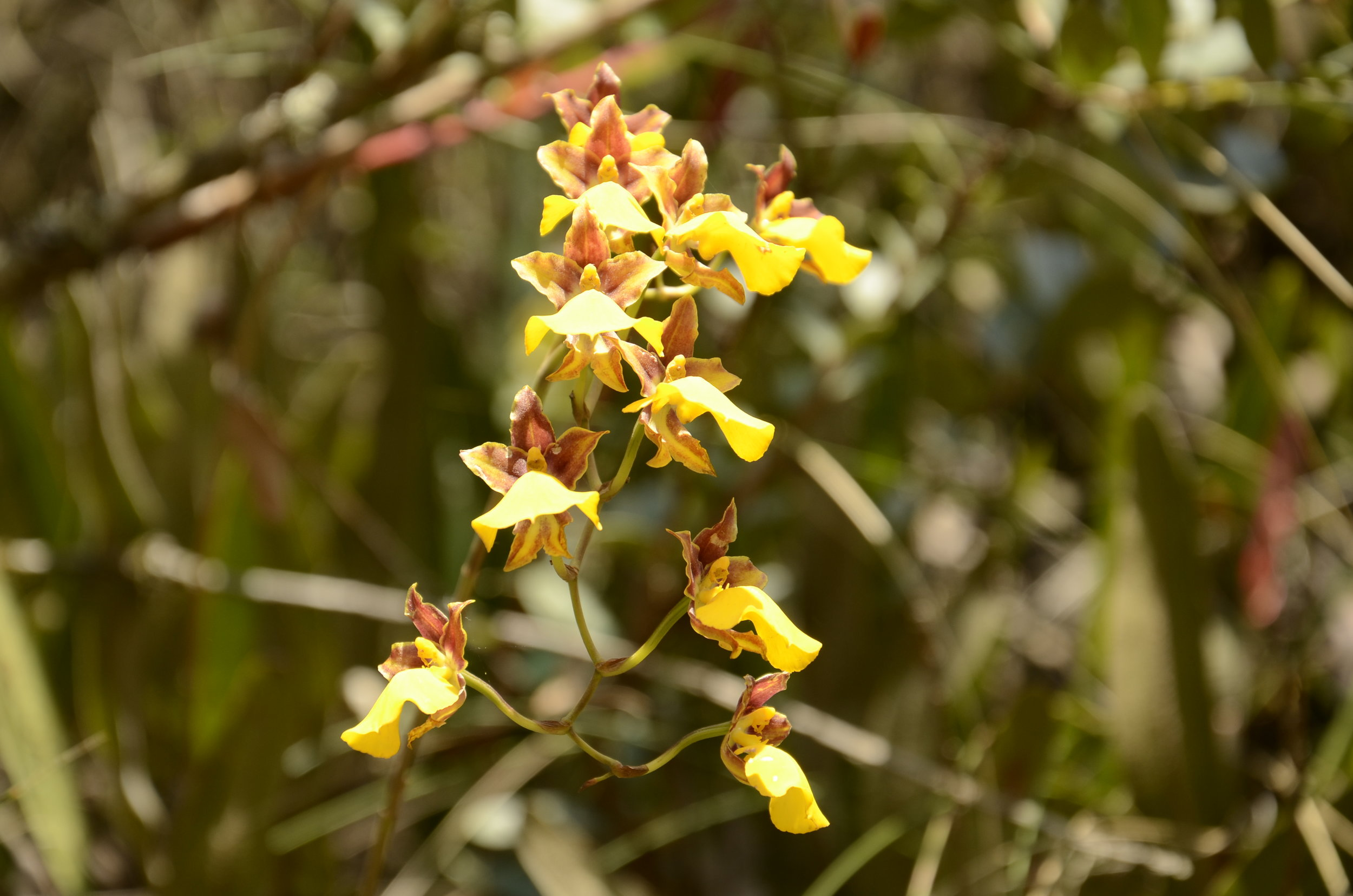 Just one species of many orchids that we saw