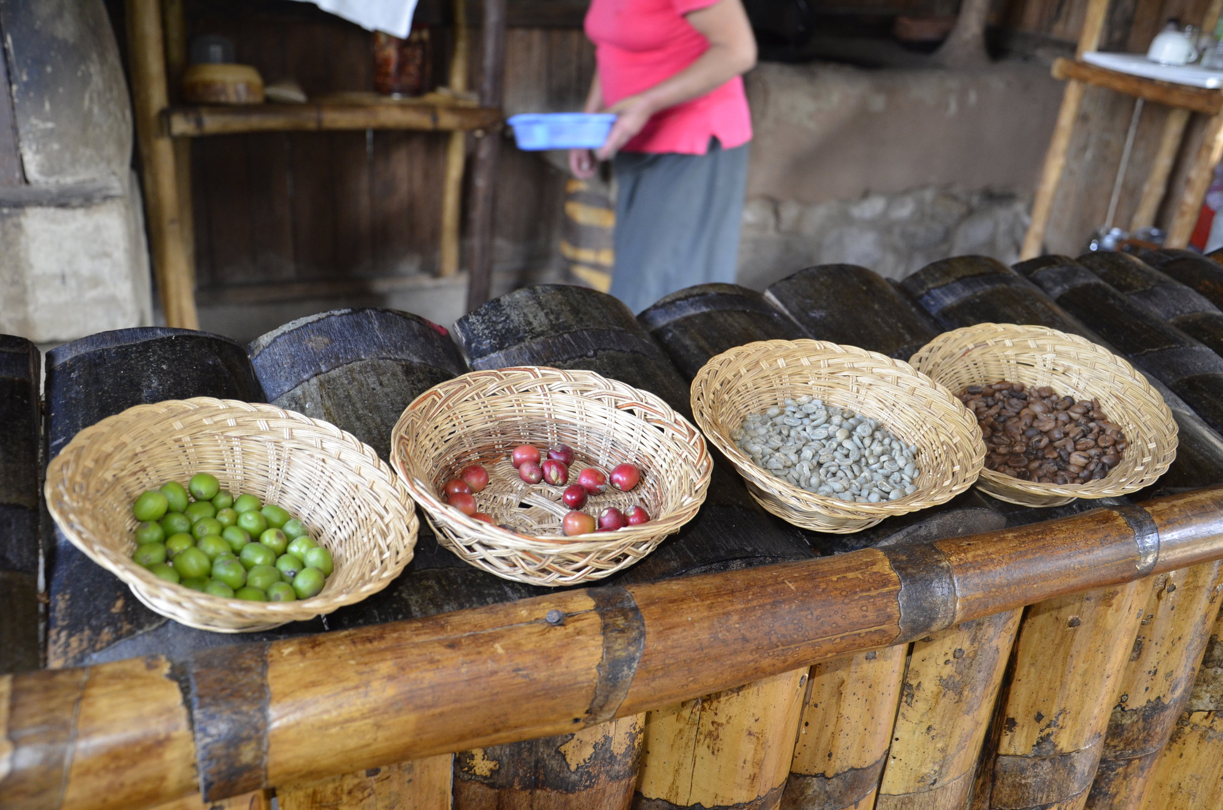 Beans that are: green; ripe; sun dried; roasted