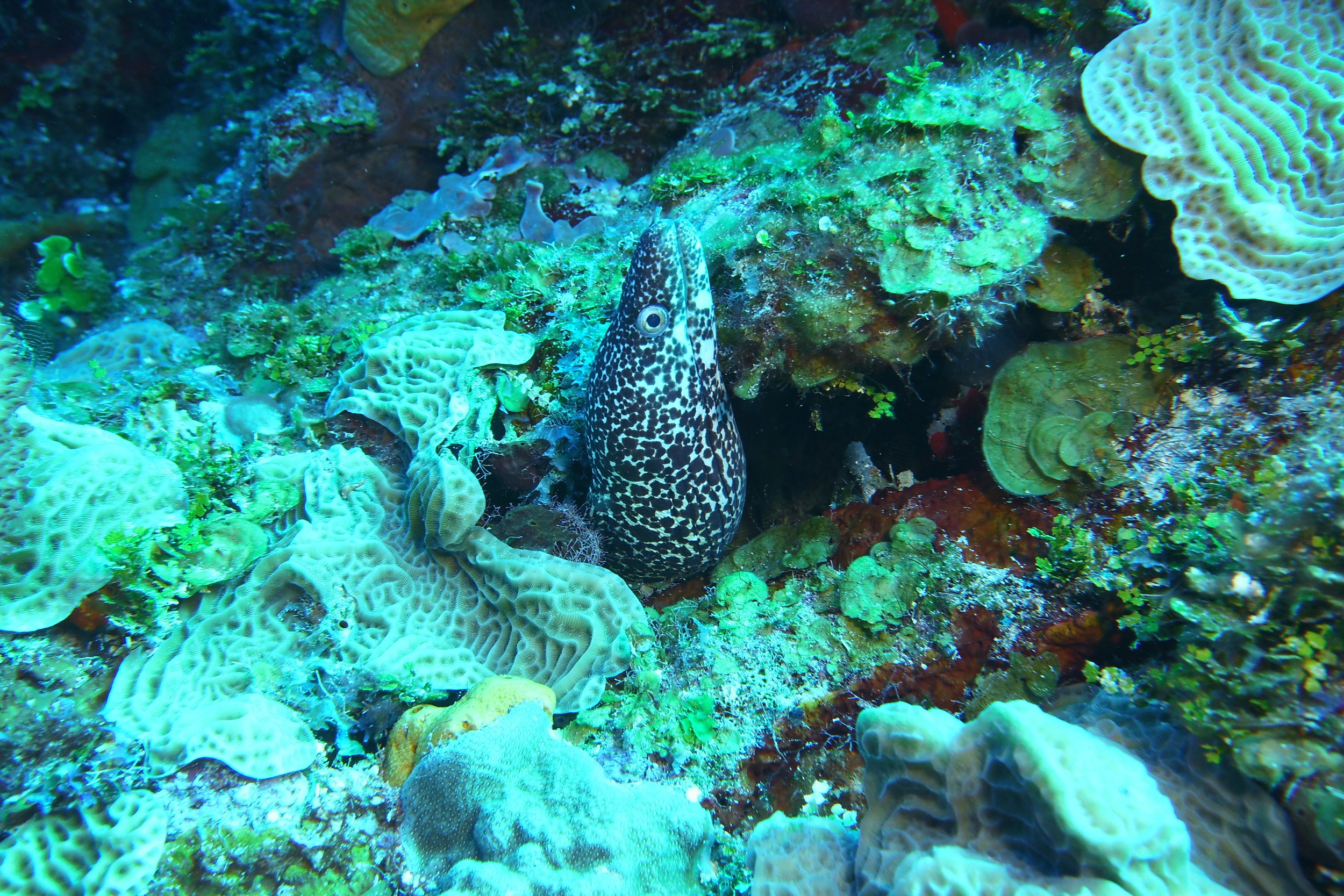This spotted eel greeted us soon after entry