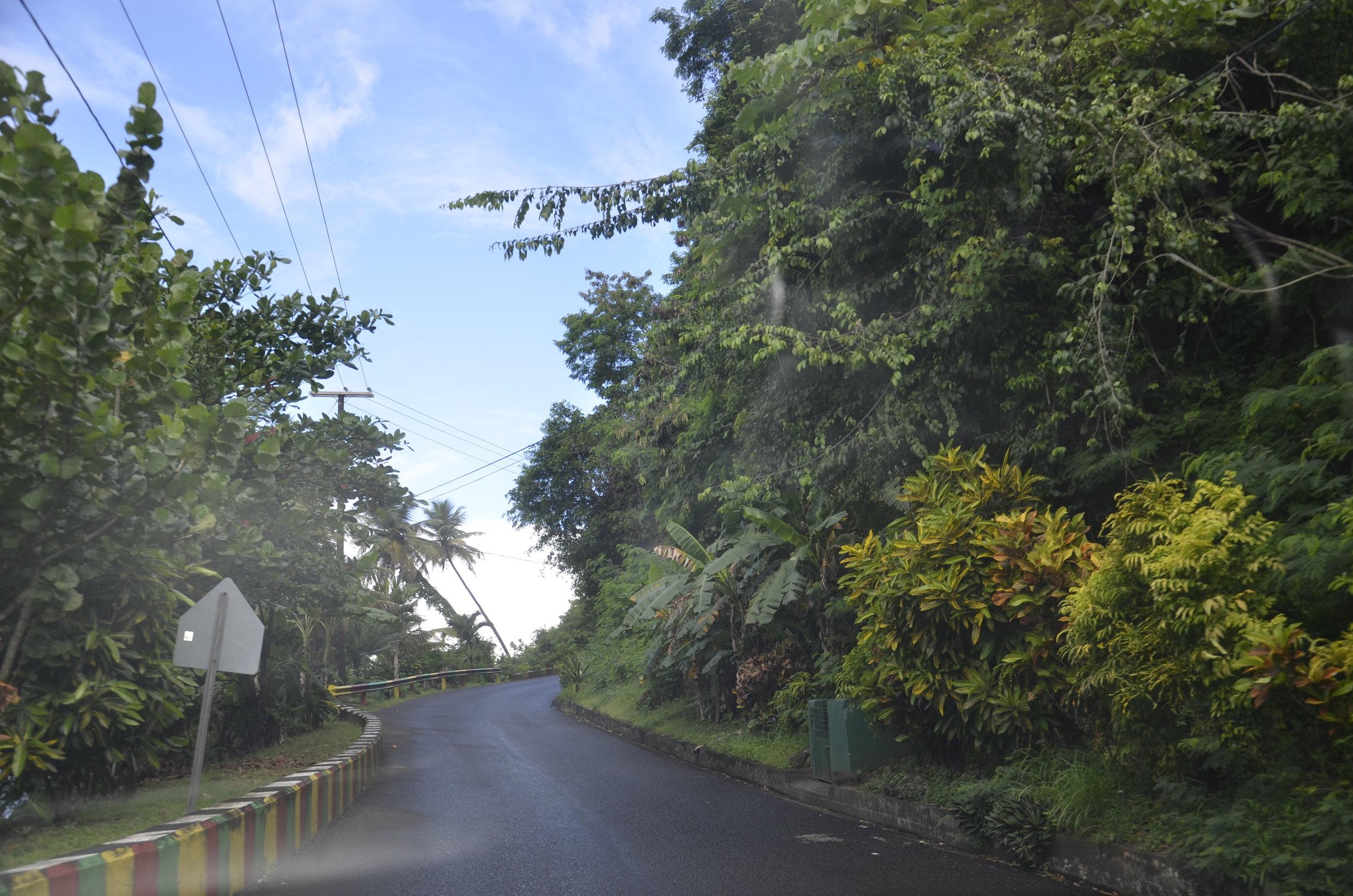 """This is a """"civilized"""" asphalt road along the coast, but it illustrates the rainforest exuberance."""