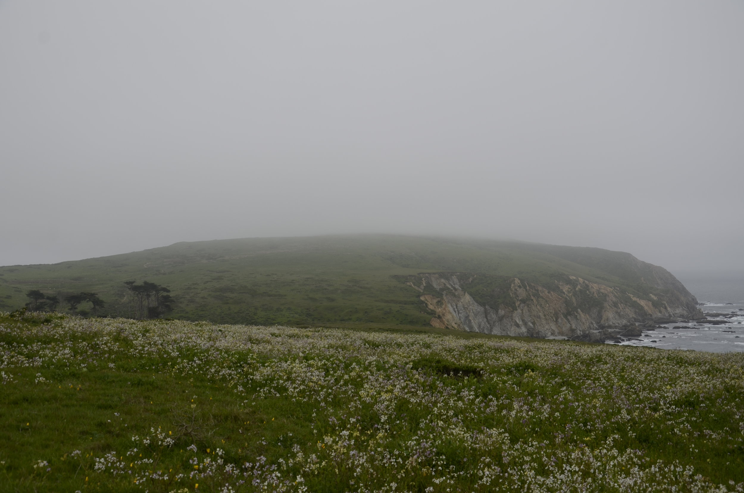 Huge fields of wildflowers, and then one lone gathering of cypress.