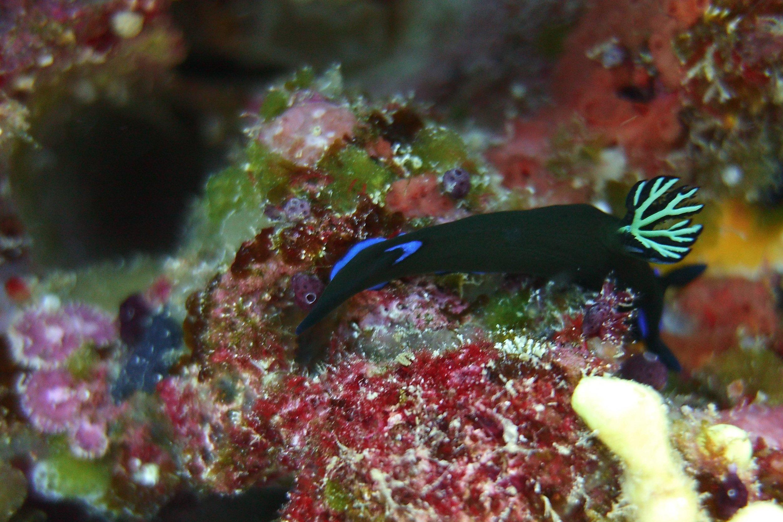 A nudibranch (fancy name for a sea slug)