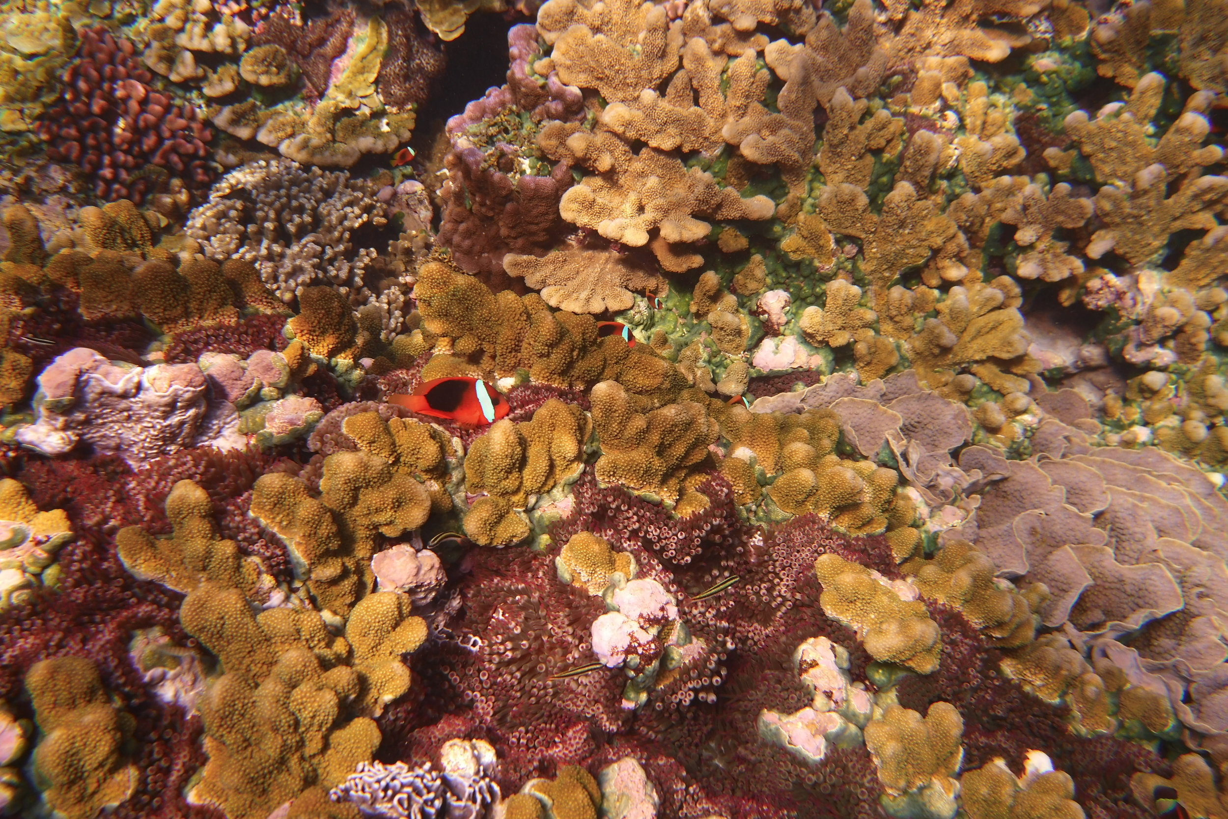 The water was extraordinarily clear, and the hard corals were just layered over each other.