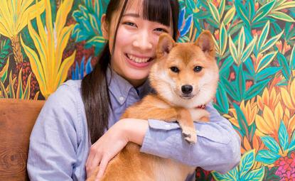 Vet / Animal trainer