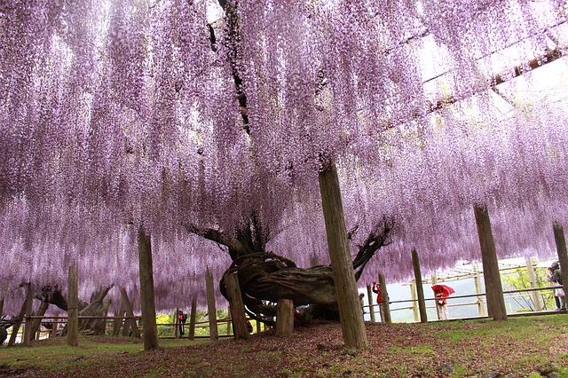 japan-2415130_640.jpg