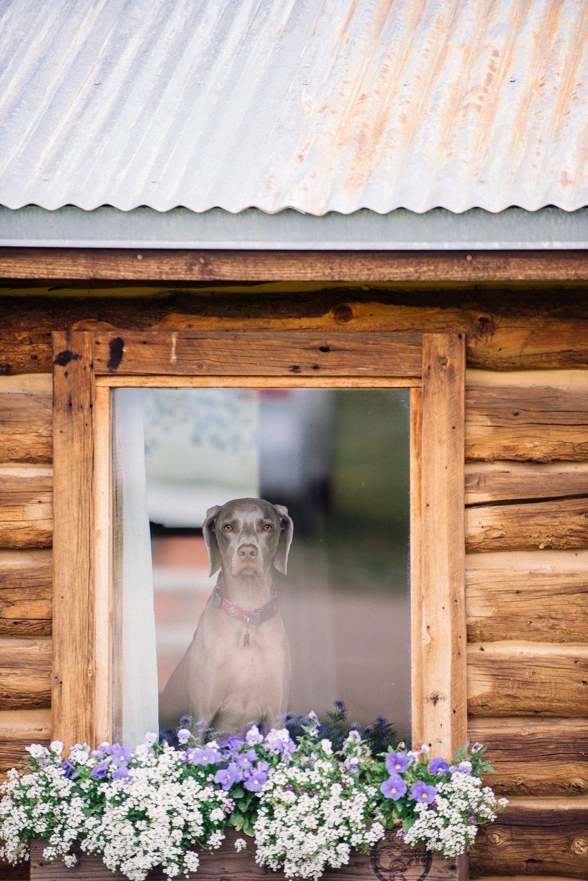 dog destination wedding photography at strawberry creek ranch in granby colorado