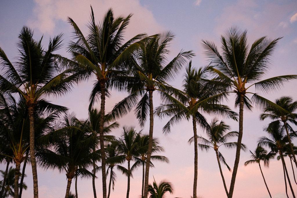 Same_Sex_Maui_Hawaii_Destination_Wedding_41.jpg