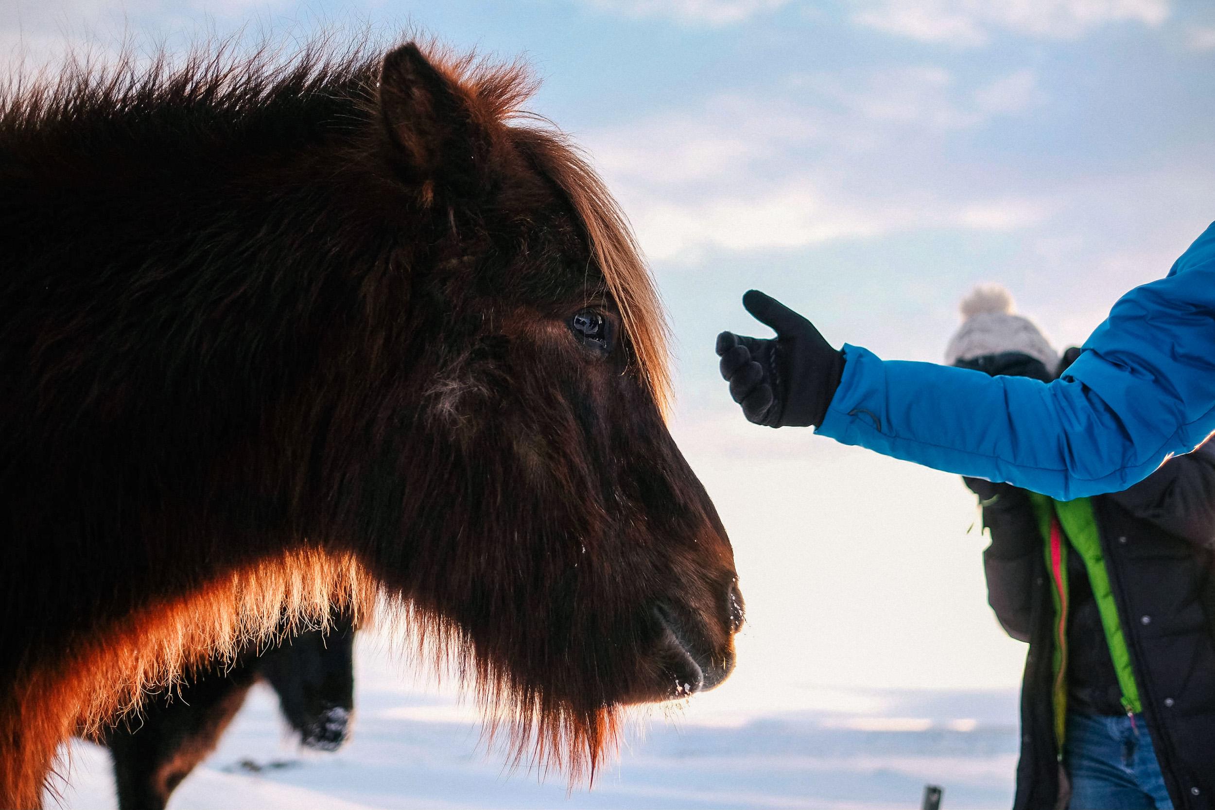Collective_Wander_Iceland_Photographers_Trip_036.jpg