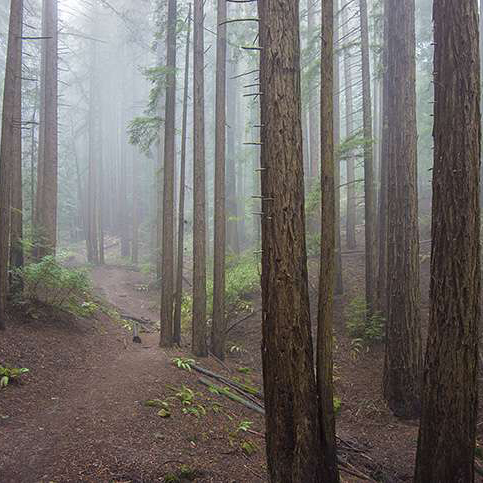 RedwoodRP4.jpg