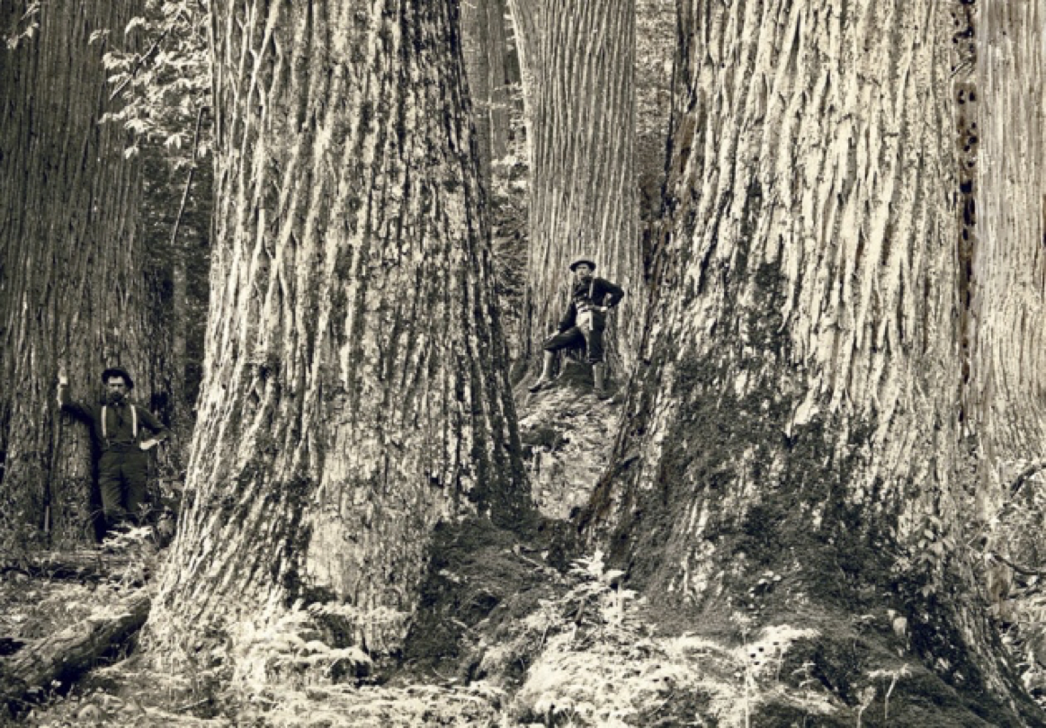 A common misconception is that most of the southeastern U.S. was covered in massive virgin forests at the time of European settlement.