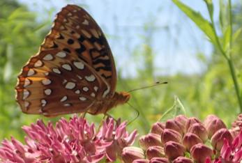 Pollinators are in sharp decline in Southern grasslands.