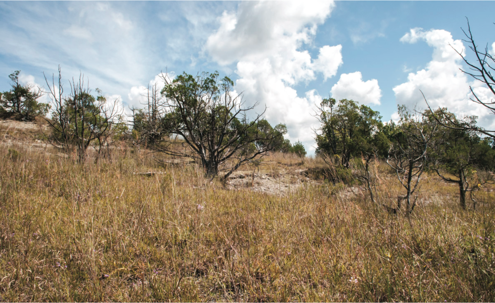 250-year-old redder trees dot privately owned Nine-Acre Barren in Decatur Co., Tennessee, a property that is located in an area with rapid development. SGI will work to ensure the best remaining natural grasslands are preserved for future generations.