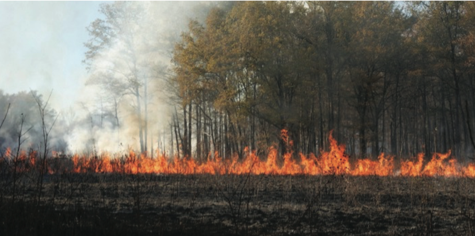 Many of our precious remaining grasslands must be restored and then maintained with fire, mowing, grazing, or selective herbicide. Without maintenance they will disappear. In this photo, the Tennessee Division of Natural Areas uses prescribed burning to maintain May Prairie State Natural Area, Coffee Co., Tennessee.