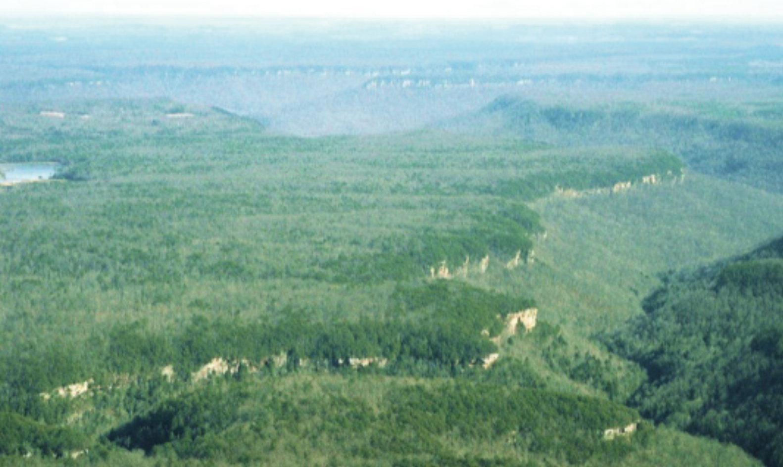 In some areas, large expanses of close-canopied forest that we know were open savannas historically can be restored with a combination of selective canopy thinning and prescribed burning. For example, the broad expanses on top of the Cumberland Plateau of Tennessee respond very well to thinning and burning and can be reverted to high quality shortleaf pine-post oak savanna.