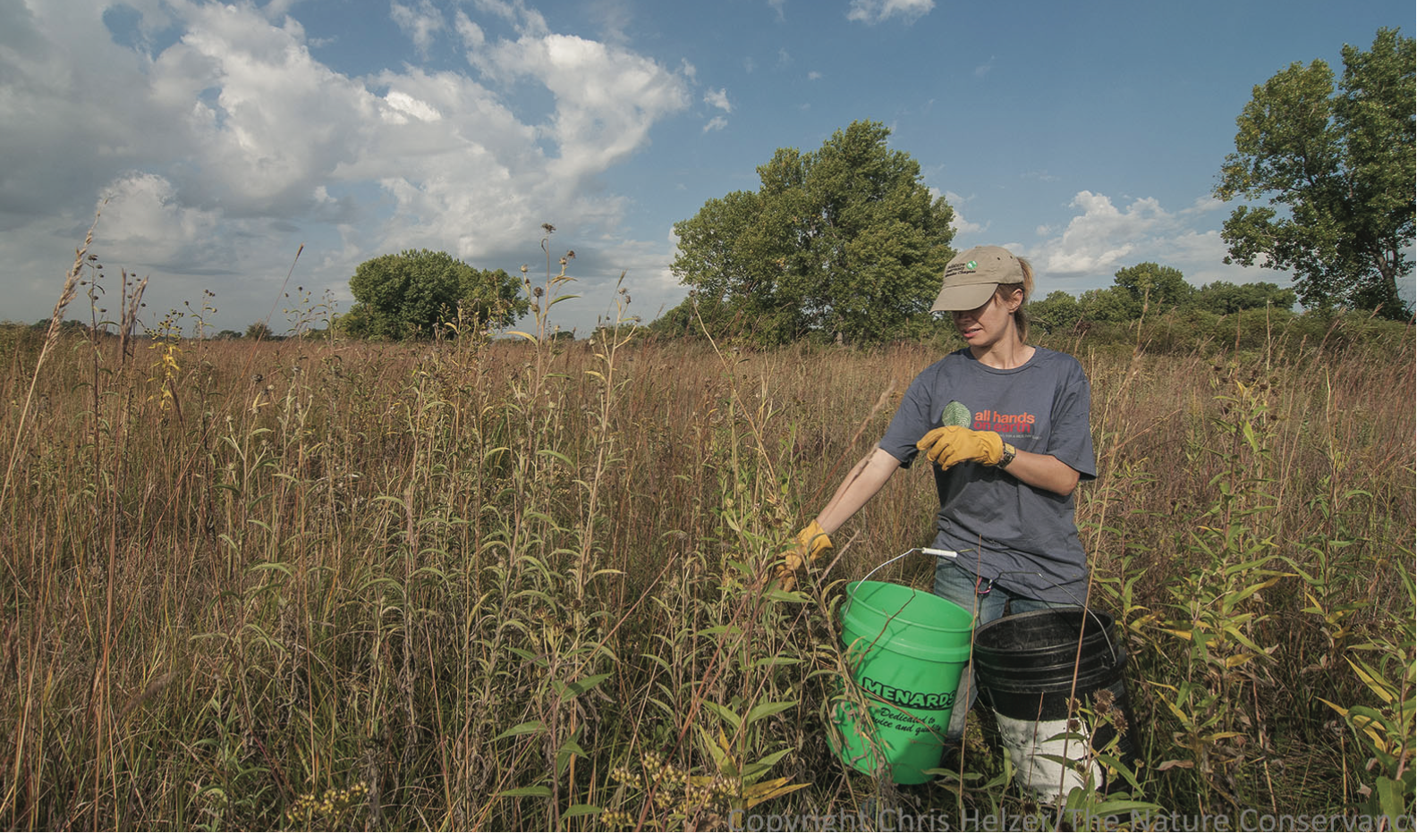 Seed collection for seed banking and grassland restoration is essential to future conservation efforts. We will look to our friends and colleagues in the Midwest who have been leading the way for decades. Photo: Chris Helzer.