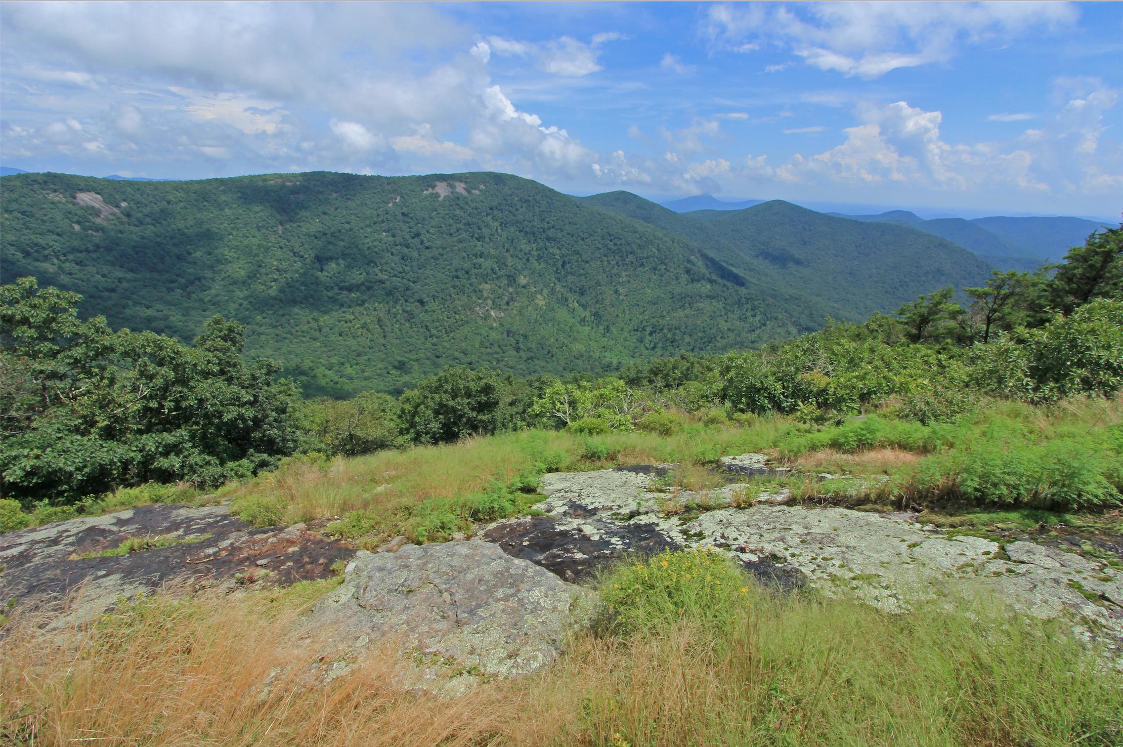 Blue Ridge Mountains Grassland Gallery — Southeastern