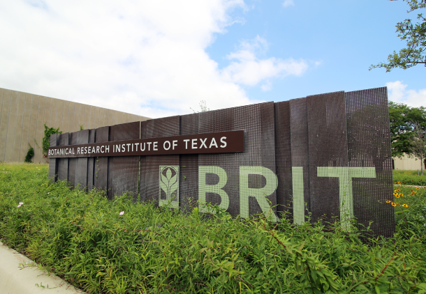 Botanical Research Institute of Texas - Fort Worth, TXBRIT is a non-profit research organization located on the grounds of Fort Worth Botanical Garden, it includes a world-class botanical research facility, the 10th largest herbarium in the country (largest in the Southeast), a 2-acre rooftop prairie, renowned research library, and a large environmental education staff. BRIT is home to BRIT Press, one of the leading botanical publishers in the Western Hemisphere and is the newest member of the Center for Plant Conservation (CPC). BRIT brings to the project a focus on western grasslands, ranch management, and excellence in the exploration of regional biodiversity.