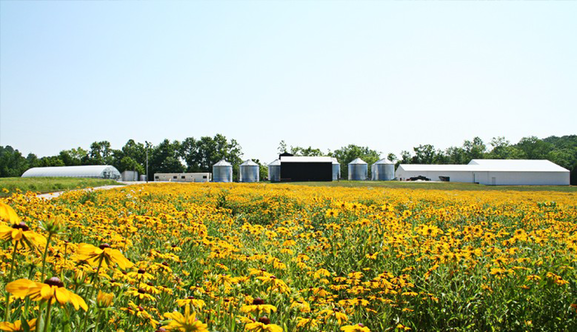 Roundstone Native Seed, LLC - Upton, KYRoundstone is one of the leading producers of native plant seeds in the eastern U.S. They are based in Munfordville, Kentucky and have a staff of nearly 40. Roundstone brings to our team an extraordinary amount of experience with processing native seeds and installing grassland restorations. They also bring a tremendous amount of credibility as they are highly regarded as a company with an unparalleled commitment to excellence and customer service.