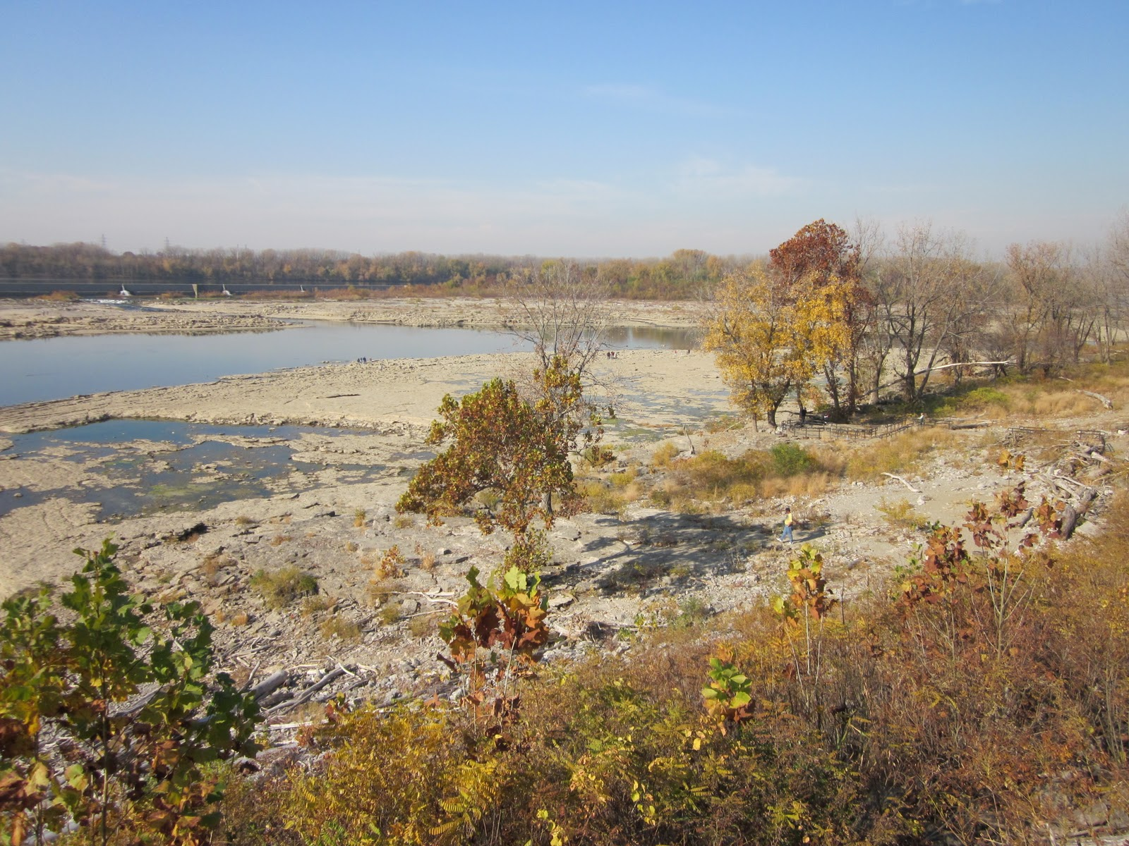 Falls of the Ohio State Park, Louisville, Kentucky, used to be an important crossing place over the wide Ohio River. Buffalo traces from the Midwest crossed here leading south into the Bluegrass and Pennyroyal Plain of Kentucky. This is the site from which Charles W. Short collected the now extinct Orbexilum stipulatum (Source:  http://www.arrowssentforth.com/2011/03/falls-of-ohio-state-park.html).