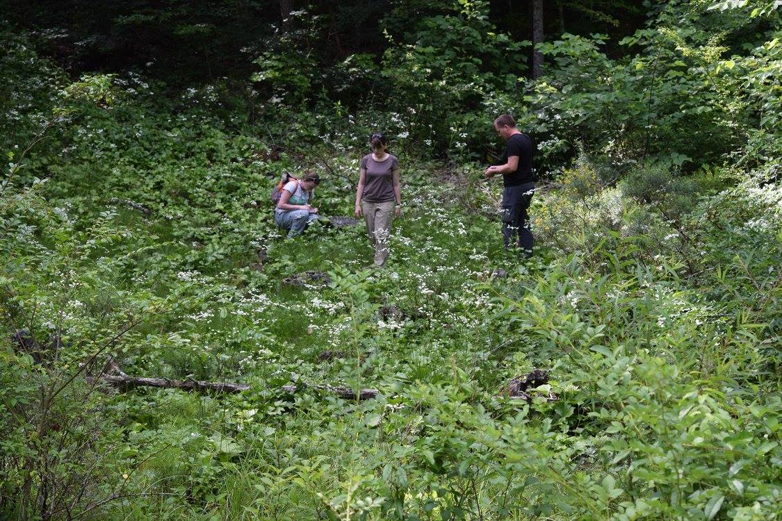 Aaron Floden (right) works with staff of the University of Tennessee documenting flora of an incredible seep discovered by Aaron about 10 years ago. Credit: Ed E. Schilling.