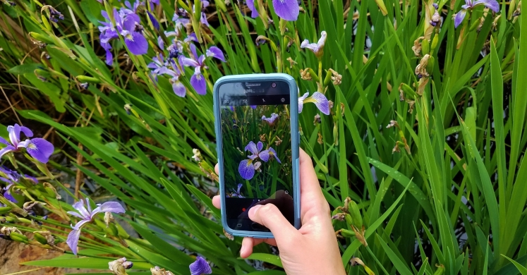 Trained volunteers and SGI staff will record data with the iNaturalist mobile app