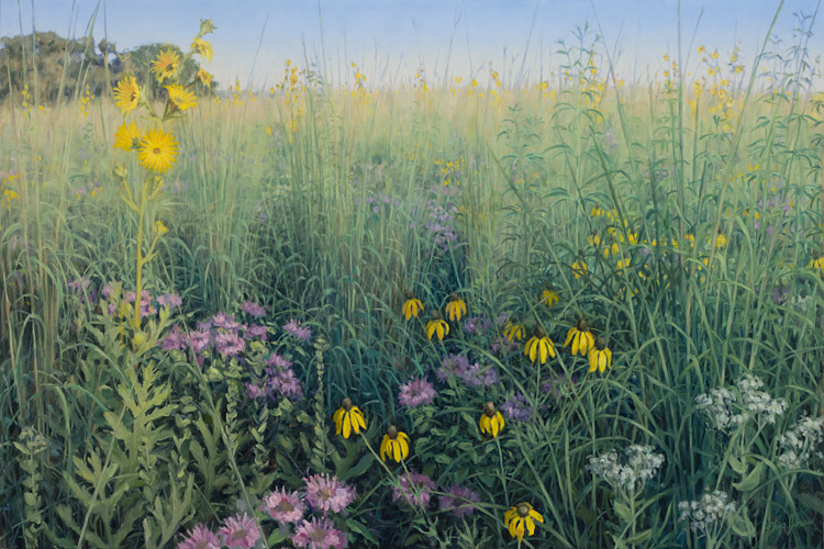 """Inspired by Poplar Creek Prairie (Late July), Cook County, Illinois, December 2013, Oil on canvas, 24 """" x 36"""", by Philip Juras.    From Philip's website: """"  In this scene, inspired by a late July visit to Poplar Creek Prairie, big bluestem grass has just begun to send its flowering stalks as high as a horse's back. Also reaching overhead is the robust stalk of a compass plant in full bloom, and stems of the not yet flowering tall tickseed. Lower down are the abundant colorful blooms of the lavender flowering bee balm and bright yellow flowers of the gray-headed coneflower. These two are often seen in recently restored areas of prairie. Also in the foreground is the off-white wild quinine and the not yet flowering stems of stiff goldenrod.    These are only a handful of over one hundred species of prairie plants that have been lovingly restored to this former farm site. Since 1989, the Poplar Prairie Stewards, a project of the Forest Preserves of Cook County, have brought some 600 acres back to a near pre-settlement condition, all centered on a tiny remnant of dry prairie that survived on a gravelly hill on the site. Although it is surrounded by the suburban sprawl of Chicago, when walking through these 600 acres one can almost imagine the vast expanse of prairies and woodlands that once covered this part of Illinois ."""" (Juras 2013)"""