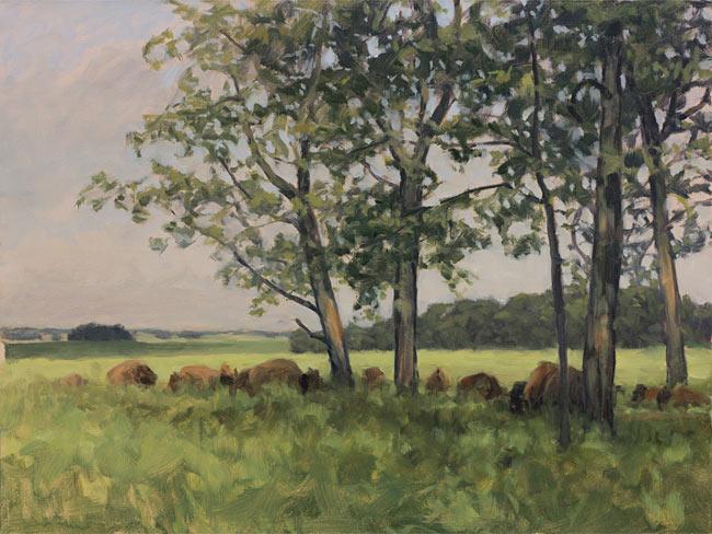 Copy of Bison Herd