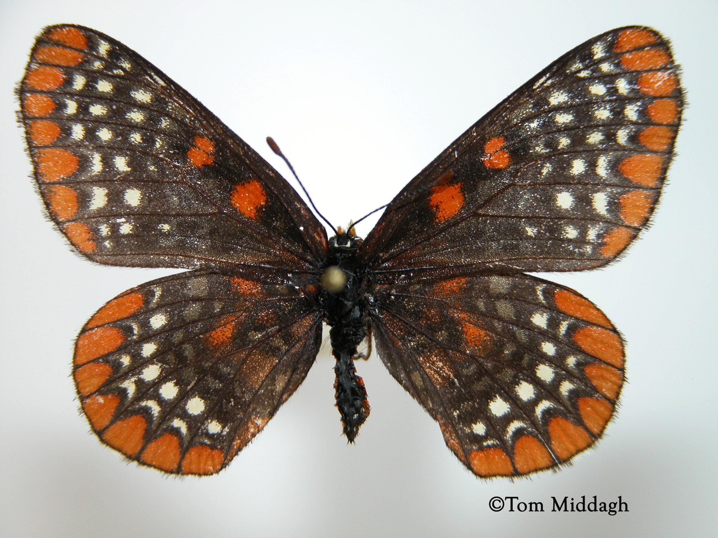 Biodiversity Documentation